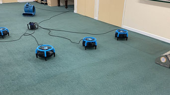 procarpetcleaningss
