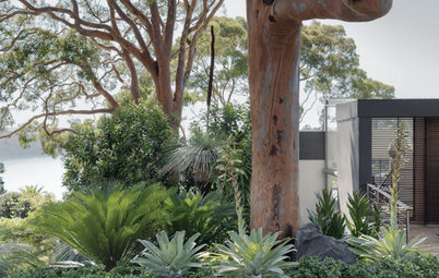 Second Life: The Plant Overhaul That Changed Up a Suburban Garden