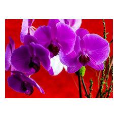 Purple Flower, Acrylic Print