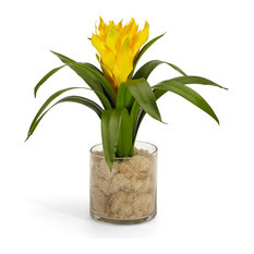 Bromeliad in Glass Vase With Moss, Yellow