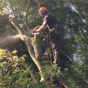MACCLESFIELD TREE & STUMP REMOVALS/MACCLESFIELD TR's photo