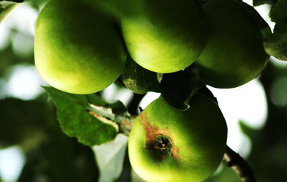 How to Add an Apple Tree to Your Edible Garden