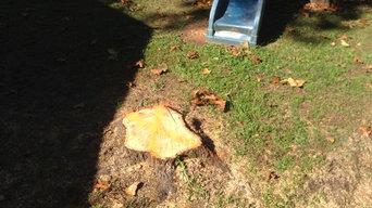 Stump Removal - playground area