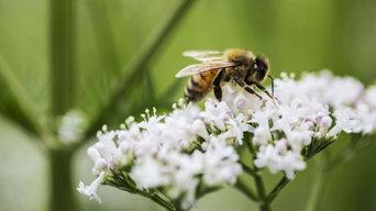 Bees Pest Control Sydney