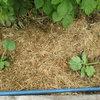 Природное земледелие: Мульчирование и задернение «для ленивых»