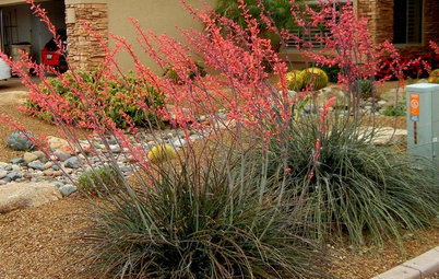 Great Design Plant: Red Yucca Spikes Dry Spots With Color