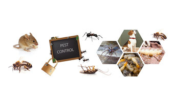 Commercial Pest Control Adelaide