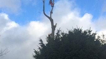 Oakland Tree Specialist