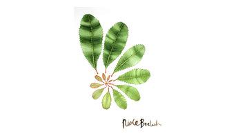Botanical: Fluid Geometry