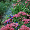 Fall Is Calling: What to Do in Your October Garden