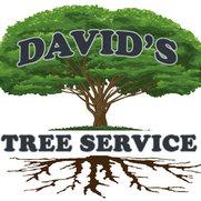 Foto de David's Tree Service, Inc.
