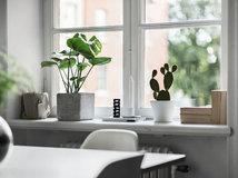 Zimmerpflanzen Schattig 10 zimmerpflanzen für den schatten