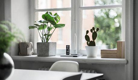 Grün ist modern: Die 11 hippsten Zimmerpflanzen