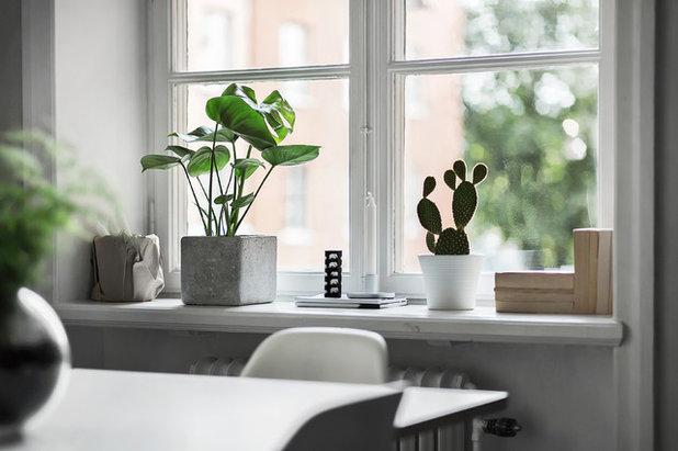 gr n ist hip 11 moderne zimmerpflanzen. Black Bedroom Furniture Sets. Home Design Ideas