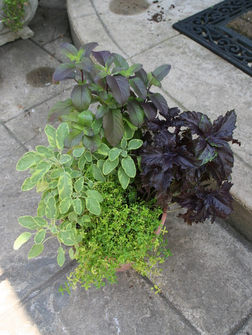 black-hued plants