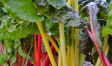 Cool-Season Vegetables: How to Grow Chard