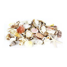 Assorted Natural Beach Sea Shells, 2.2lb Bag, Vibrant Mix/Finger Starfish