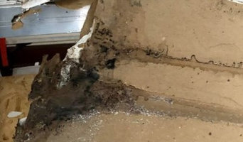Mold Detection in Indianapolis, IN