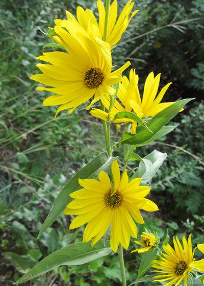 by Pollination Press LLC