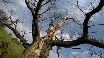 Tree Works 1