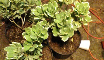 Plants for sell