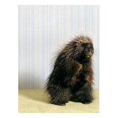 """Porcupineon Gray"" Canvas Wall Art by Catherine Ledner,  10""x14"""