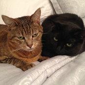 cat_mom's photo