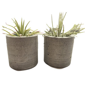 Set of 2, Small Cylindrical Concrete Planter, Air Plant Holder