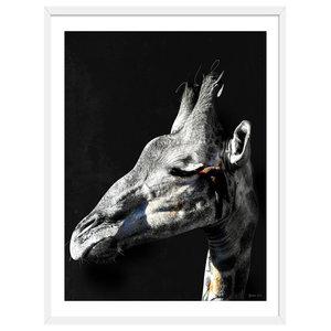 """""""Having A Giraffe"""" Animal Art Print, White Framed, 50x70 cm"""