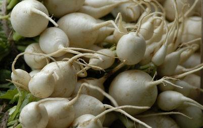 Cool-Season Vegetables: How to Grow Turnips