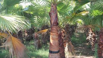palms company