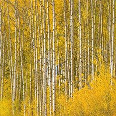 Best Shop Birch Tree Wallpaper On Houzz