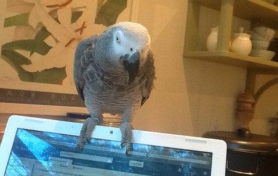 Pet of the Week: Mai Tai the Parrot