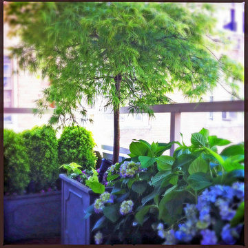 NYC Small Terrace: Balcony, Roof Garden, Container Plants, Shade, Japanese Maple