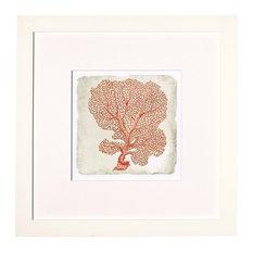 Coral in White #I Artwork