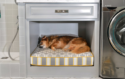 Room of the Day: Laundry Room Goes to the Dogs