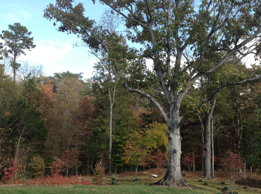 Autumn in Albemarle, VA:  Bringing Nature Home