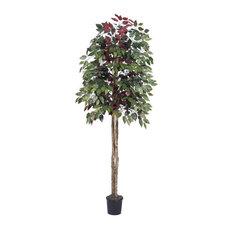 6' Capensia Tree