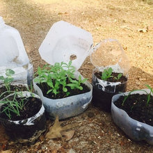 Sunday Sowers: Winter Sowing Grow Food + Flowers It's So Easy