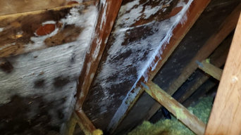 Attic Mold Removal in Grove City, OH