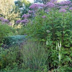 Izel Native Plants Washington Dc Us 20015