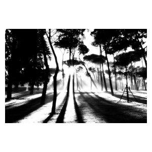 "Pixtury ""Rising Sun, Villa Borghese, Rome"" Photograph, Canvas Print, 70x100 cm"