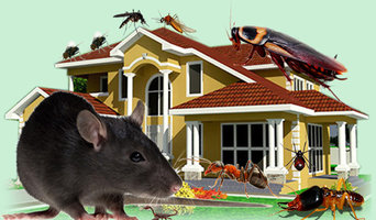 Affordable Bed Bug Removal Specialists