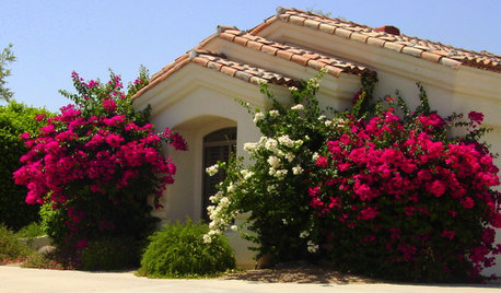 Great Design Plant: Sun-Loving Bougainvillea Showers Yards With Color