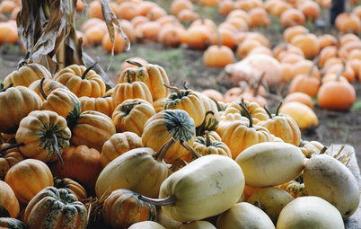 Get Pumpkins! And More Ways to Make the Most of This Weekend