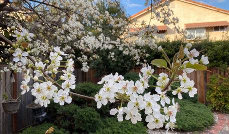 Hur ser våren ut hos dig? Gå med i den globala rörelsen