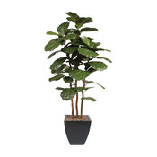 7' Brazilian Fiddle Leaf Tree With Real Wood Trunks in Metal Planter, Black