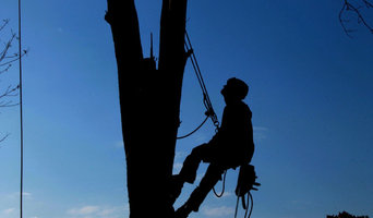 Caboolture Tree Removal North Lakes