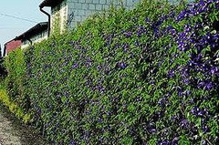 Habiller un grand mur dans un jardin
