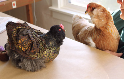 Pet's Place: A Flock of Chickens Inspires Decor
